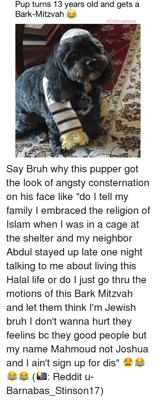"""Caged: Pup turns 13 years old and gets a  Bark-Mitzvah  @DrSmashlove Say Bruh why this pupper got the look of angsty consternation on his face like """"do I tell my family I embraced the religion of Islam when I was in a cage at the shelter and my neighbor Abdul stayed up late one night talking to me about living this Halal life or do I just go thru the motions of this Bark Mitzvah and let them think I'm Jewish bruh I don't wanna hurt they feelins bc they good people but my name Mahmoud not Joshua and I ain't sign up for dis"""" 😫😂😂😂 (📸: Reddit u-Barnabas_Stinson17)"""