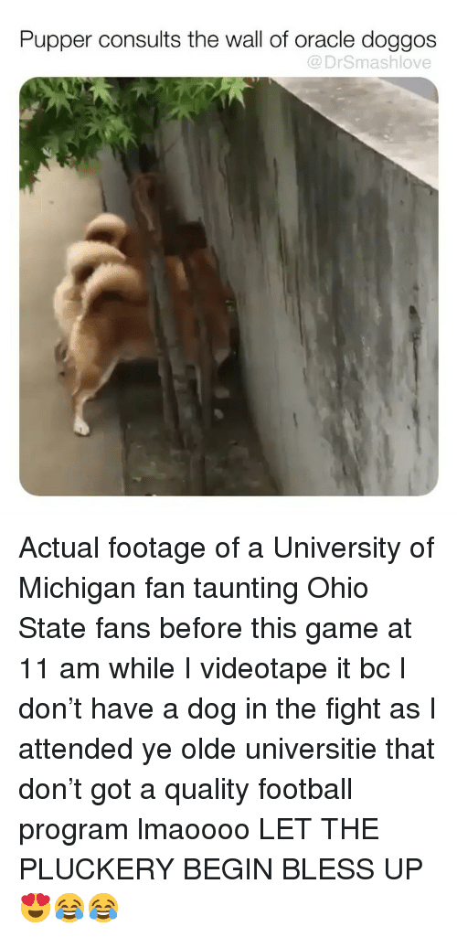 University of Michigan: Pupper consults the wall of oracle doggos  @ DrSmashlove Actual footage of a University of Michigan fan taunting Ohio State fans before this game at 11 am while I videotape it bc I don't have a dog in the fight as I attended ye olde universitie that don't got a quality football program lmaoooo LET THE PLUCKERY BEGIN BLESS UP 😍😂😂