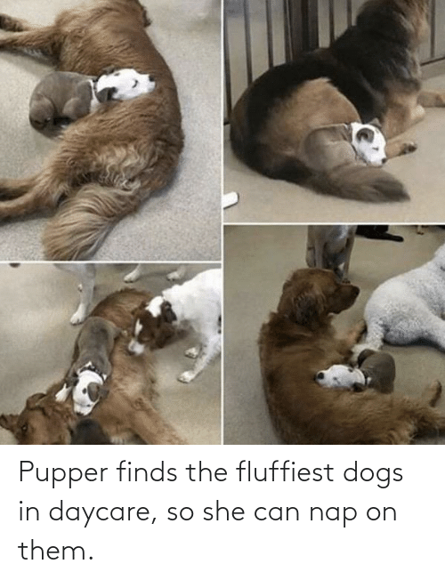 nap: Pupper finds the fluffiest dogs in daycare, so she can nap on them.