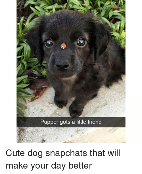 Cute, Funny, and Dog: Pupper gots a little friend Cute dog snapchats that will make your day better