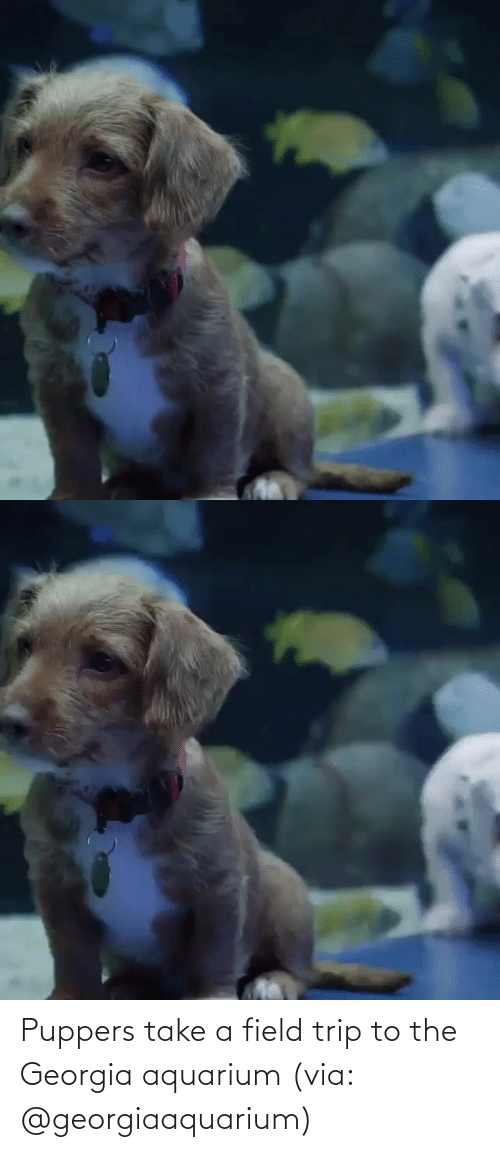 Field Trip: Puppers take a field trip to the Georgia aquarium (via: @georgiaaquarium)