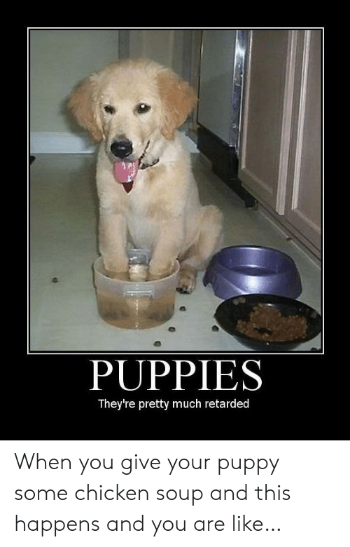 Puppies: PUPPIES  They're pretty much retarded When you give your puppy some chicken soup and this happens and you are like…