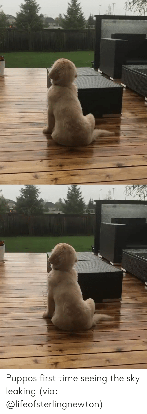 First Time: Puppos first time seeing the sky leaking (via: @lifeofsterlingnewton)