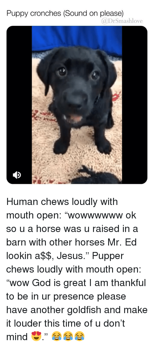 "God, Goldfish, and Horses: Puppy cronches (Sound on please)  @DrSmashlove Human chews loudly with mouth open: ""wowwwwww ok so u a horse was u raised in a barn with other horses Mr. Ed lookin a$$, Jesus."" Pupper chews loudly with mouth open: ""wow God is great I am thankful to be in ur presence please have another goldfish and make it louder this time of u don't mind 😍."" 😂😂😂"