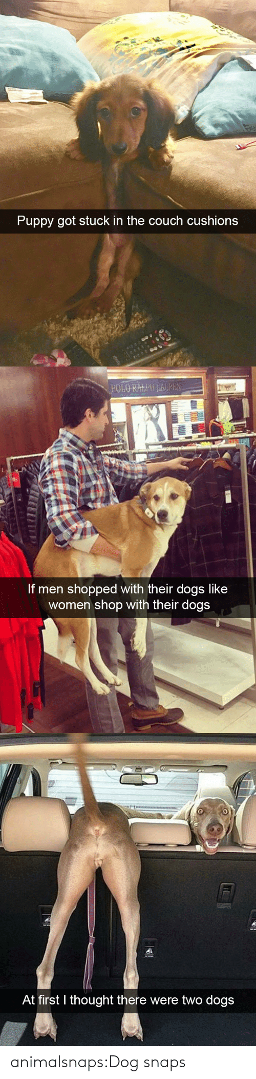 Dogs, Target, and Tumblr: Puppy got stuck in the couch cushions   POLO RALPH LAUPEN  If men shopped with their dogs like  women shop with their dogs   At first thought there were two dogs animalsnaps:Dog snaps
