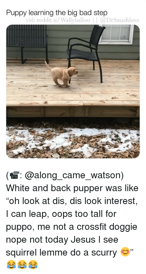 "Bad, Jesus, and Memes: Puppy learning the big bad step  vid: reddit u/Wallyballoo | @DrSmashlove (📹: @along_came_watson) White and back pupper was like ""oh look at dis, dis look interest, I can leap, oops too tall for puppo, me not a crossfit doggie nope not today Jesus I see squirrel lemme do a scurry 😊"" 😂😂😂"