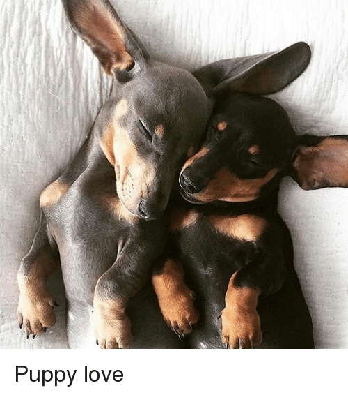 puppies love: Puppy love