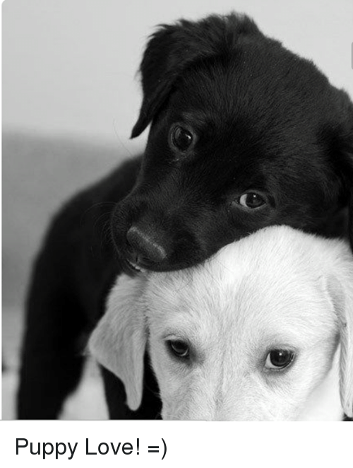 puppies love: Puppy Love!   =)