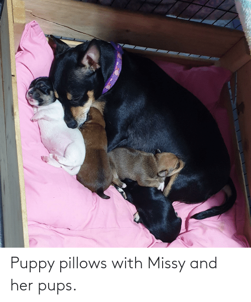 pillows: Puppy pillows with Missy and her pups.