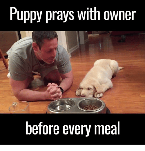 Memes, Puppies, and Puppy: Puppy prays with owner  before every meal