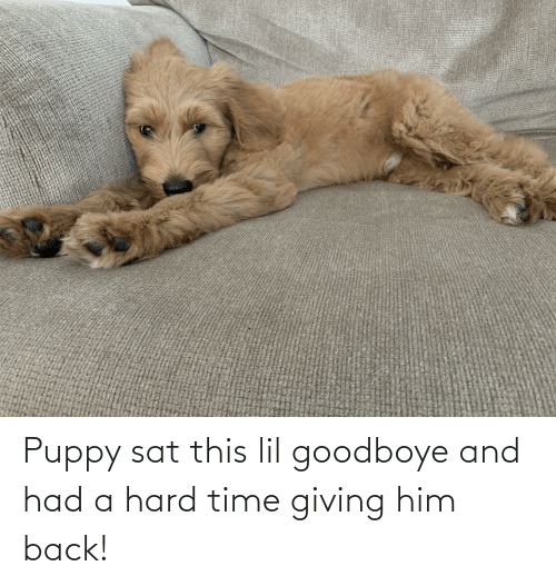 sat: Puppy sat this lil goodboye and had a hard time giving him back!
