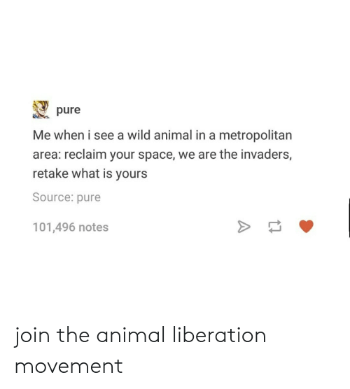 Tumblr, Animal, and Space: pure  Me when i see a wild animal in a metropolitan  area: reclaim your space, we are the invaders,  retake what is yours  Source: pure  101,496 notes join the animal liberation movement