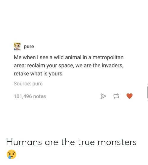 True, Tumblr, and Animal: pure  Me when i see a wild animal in a metropolitan  area: reclaim your space, we are the invaders,  retake what is yours  Source: pure  101,496 notes Humans are the true monsters 😢