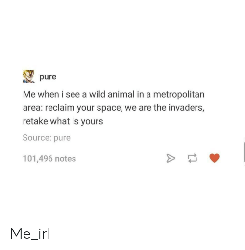 Animal, Space, and What Is: pure  Me when i see a wild animal in a metropolitan  area: reclaim your space, we are the invaders,  retake what is yours  Source: pure  101,496 notes Me_irl