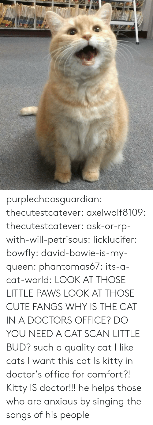Paws: purplechaosguardian: thecutestcatever:  axelwolf8109:   thecutestcatever:   ask-or-rp-with-will-petrisous:  licklucifer:  bowfly:  david-bowie-is-my-queen:  phantomas67:  its-a-cat-world:  LOOK AT THOSE LITTLE PAWS  LOOK AT THOSE CUTE FANGS  WHY IS THE CAT IN A DOCTORS OFFICE?  DO YOU NEED A CAT SCAN LITTLE BUD?  such a quality cat  I like cats  I want this cat    Is kitty in doctor's office for comfort?!   Kitty IS doctor!!!  he helps those who are anxious by singing the songs of his people