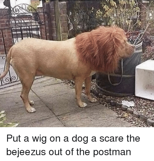 Scare, Dog, and Postman: Put a wig on a dog a scare the bejeezus out of the postman