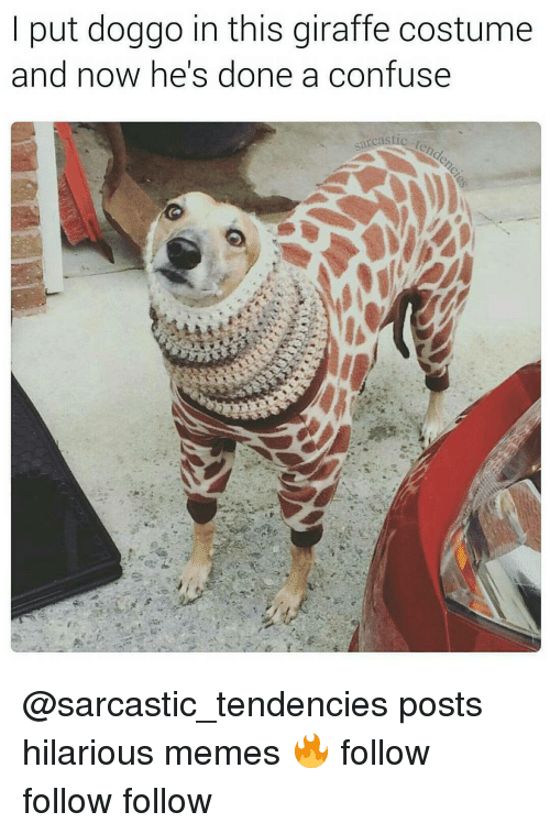 hilarious meme: put doggo in this giraffe costume  and now he's done a confuse @sarcastic_tendencies posts hilarious memes 🔥 follow follow follow