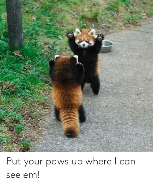 Paws: Put your paws up where I can see em!