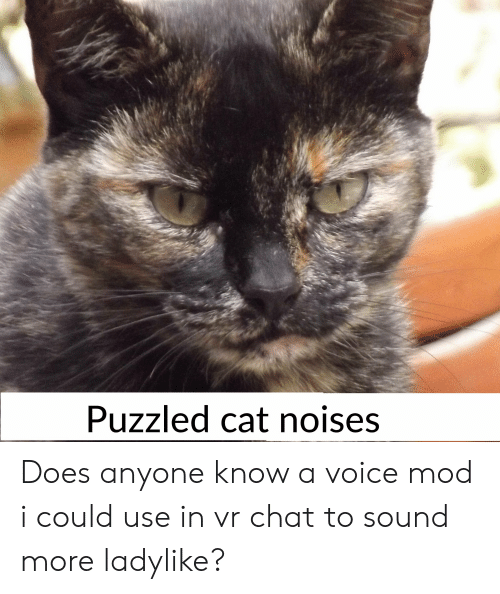 Puzzled Cat Noises Does Anyone Know a Voice Mod I Could Use