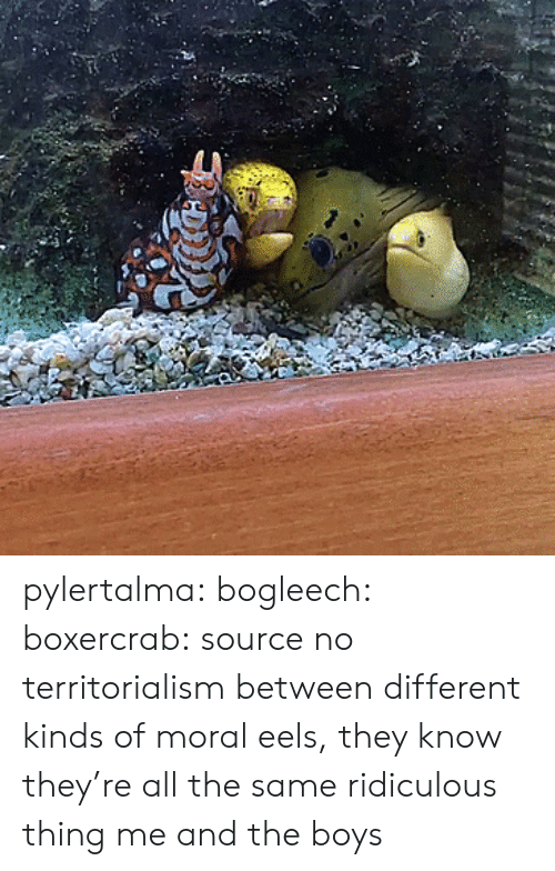 Bogleech: pylertalma:  bogleech:  boxercrab: source no territorialism between different kinds of moral eels, they know they're all the same ridiculous thing   me and the boys