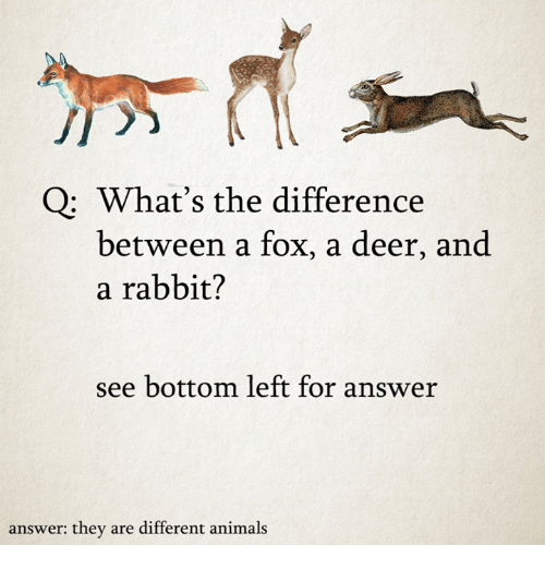 Animals, Dank, and Deer: Q: What's the difference  between a fox, a deer, and  a rabbit?  see bottom left for answer  answer: they are different animals