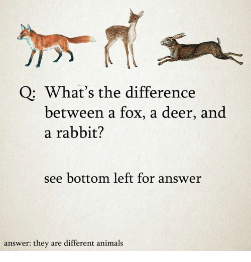 Animals, Deer, and Memes: Q What's the difference  between a fox, a deer, and  a rabbit?  see bottom left for answer  answer: they are different animals