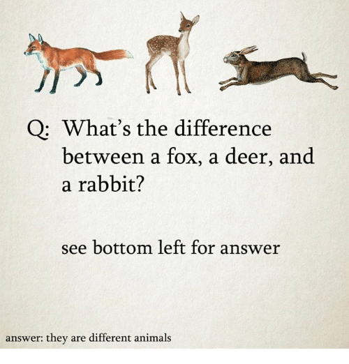 Animals, Deer, and Rabbit: Q: What's the difference  between a fox, a deer, and  a rabbit?  see bottom left for answer  answer: they are different animals