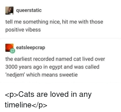 Cats, Egypt, and Nice: queerstatic  tell me something nice, hit me with those  positive vibess  eatsleepcrap  the earliest recorded named cat lived over  3000 years ago in egypt and was called  'nedjem which means sweetie <p>Cats are loved in any timeline</p>