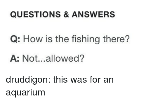 Target, Tumblr, and Aquarium: QUESTIONS & ANSWERS  Q: How is the fishing there?  A: Not...allowed? druddigon: this was for an aquarium