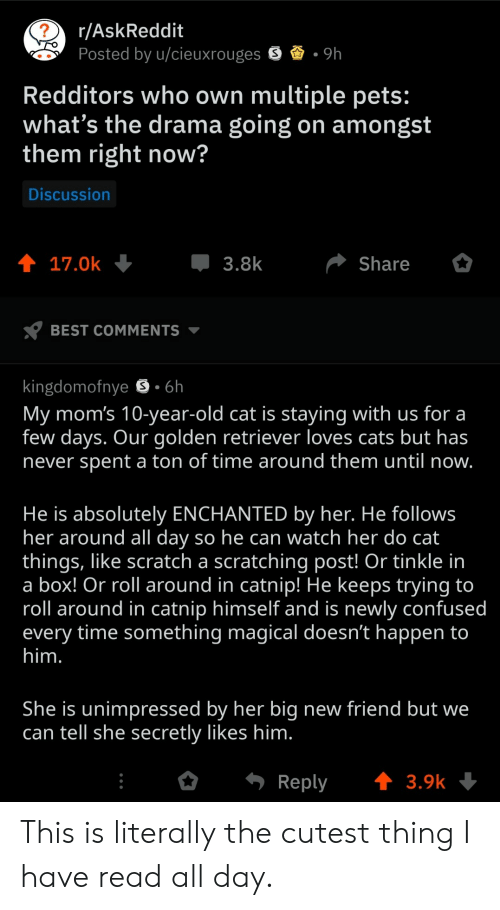 catnip: r/AskReddit  Posted by u/cieuxrouges  Redditors who own multiple pets:  what's the drama going on amongst  them right now?  Discussion  17.0k  3.8  Share  BEST COMMENTS  kingdomofnye S 6h  My mom's 10-year-old cat is staying with us for a  few days. Our golden retriever loves cats but has  never spent a ton of time around them until now  He is absolutely ENCHANTED by her. He follows  her around all day so he can watch her do cat  things, like scratch a scratching post! Or tinkle in  a box! Or roll around in catnip! He keeps trying to  roll around in catnip himself and is newly confused  every time something magical doesn't happen to  him  She is unimpressed by her big new friend but we  can tell she secretly likes him  o  Reply  3.9k This is literally the cutest thing I have read all day.