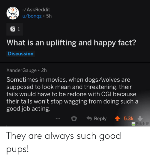 Dogs, Movies, and Good: r/AskReddit  u/bonqz 5h  S 1  What is an uplifting and happy fact?  Discussion  XanderGauge 2h  Sometimes in movies, when dogs/wolves are  supposed to look mean and threatening, their  tails would have to be redone with CGI because  their tails won't stop wagging from doing such a  good job acting.  Reply  5.3k  Stitch It! They are always such good pups!