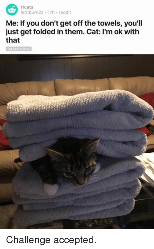Memes, 🤖, and Challenge Accepted: r/cats  etitburn22 17h reddit  Me: If you don't get off the towels, you'll  just get folded in them. Cat: l'm ok with  that  CAT PICTURE Challenge accepted.