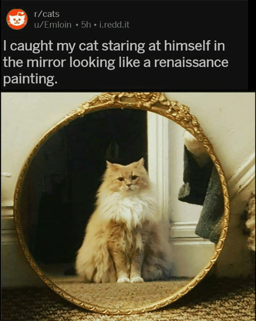 Caught My: r/cats  u/Emloin 5h i.redd.it  I caught my cat staring at himself in  the mirror looking like a renaissance  painting.