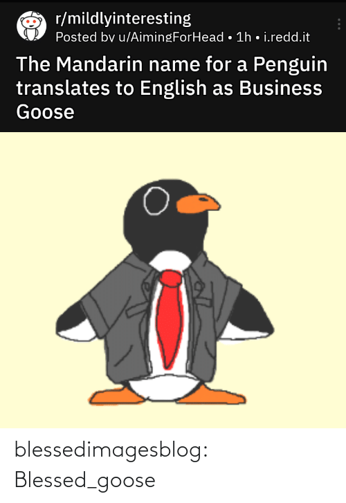 Penguin: r/mildlyinteresting  Posted bv u/AimingForHead • 1h • i.redd.it  The Mandarin name for a Penguin  translates to English as Business  Goose blessedimagesblog:  Blessed_goose