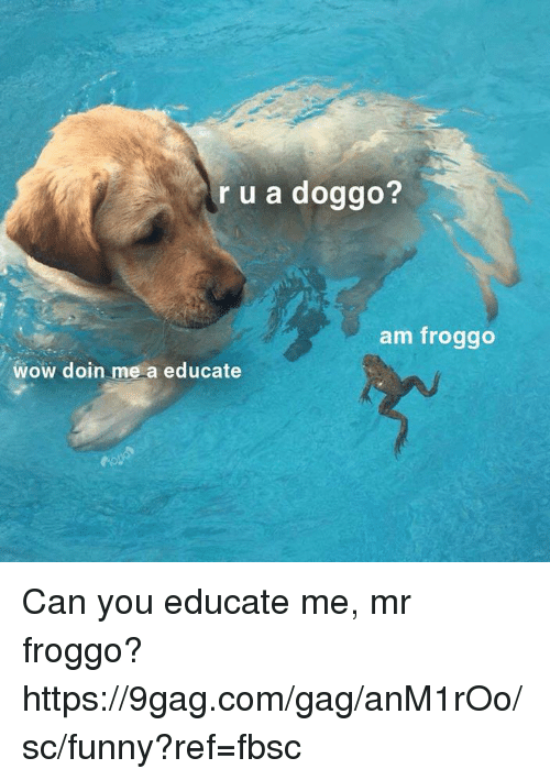 9gag, Dank, and Funny: r u a doggo?  am froggo  wow doin me a educate Can you educate me, mr froggo?  https://9gag.com/gag/anM1rOo/sc/funny?ref=fbsc