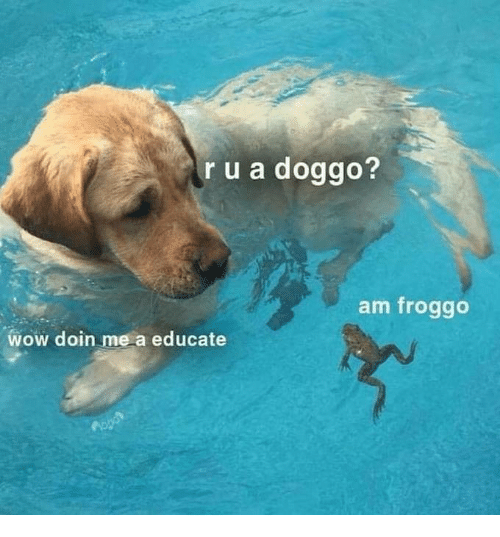 Wow, Doggo, and Froggo: r u a doggo?  am froggo  wow doin me a educate