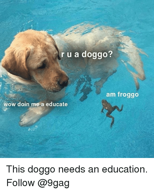 9gag, Memes, and Wow: r u a doggo?  am froggo  wow doin me a educate This doggo needs an education. Follow @9gag