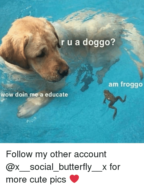 Cute, Memes, and Wow: r u a doggo?  am froggo  wow doin me a educate Follow my other account @x__social_butterfly__x for more cute pics ❤