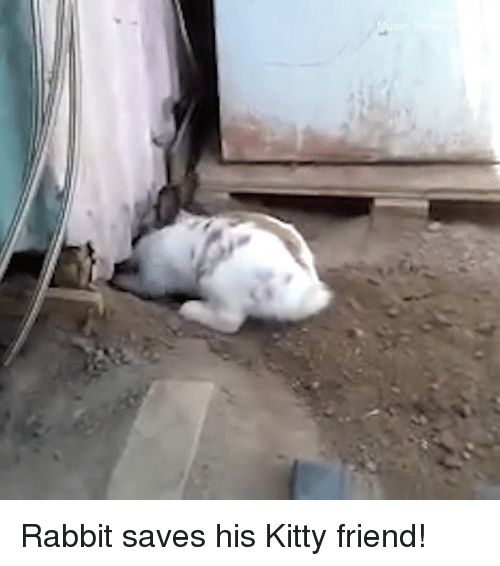 Memes, Rabbit, and 🤖: Rabbit saves his Kitty friend!