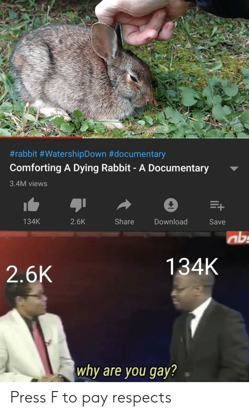 Documentary:  #rabbit #WatershipDown #documentary  Comforting A Dying Rabbit- A Documentary  3.4M views  Share  134K  2.6K  Download  Save  ab  134K  2.6K  why are you gay? Press F to pay respects