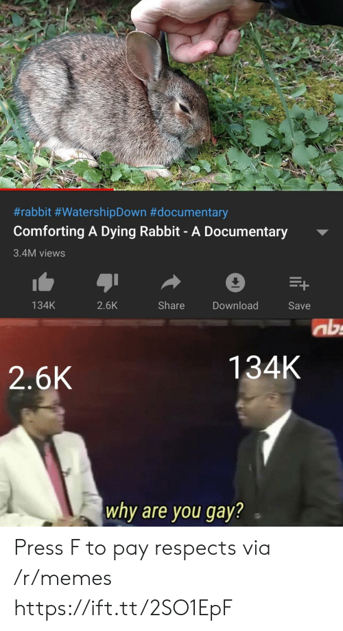 Documentary:  #rabbit #WatershipDown #documentary  Comforting A Dying Rabbit- A Documentary  3.4M views  Share  134K  2.6K  Download  Save  ab  134K  2.6K  why are you gay? Press F to pay respects via /r/memes https://ift.tt/2SO1EpF