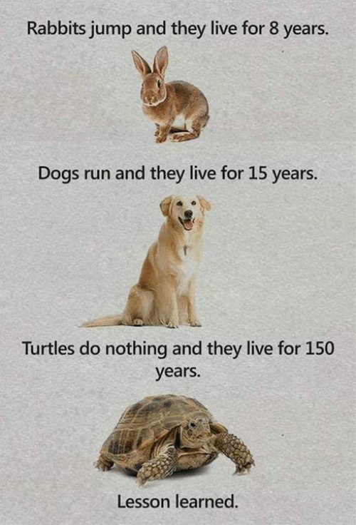Dank, Dogs, and Run: Rabbits jump and they live for 8 years.  Dogs run and they live for 15 years.  Turtles do nothing and they live for 150  years.  Lesson learned.