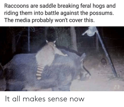 Possums: Raccoons are saddle breaking feral hogs and  riding them into battle against the possums.  The media probably won't cover this. It all makes sense now