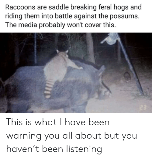 Possums: Raccoons are saddle breaking feral hogs and  riding them into battle against the possums.  The media probably won't cover this This is what I have been warning you all about but you haven't been listening