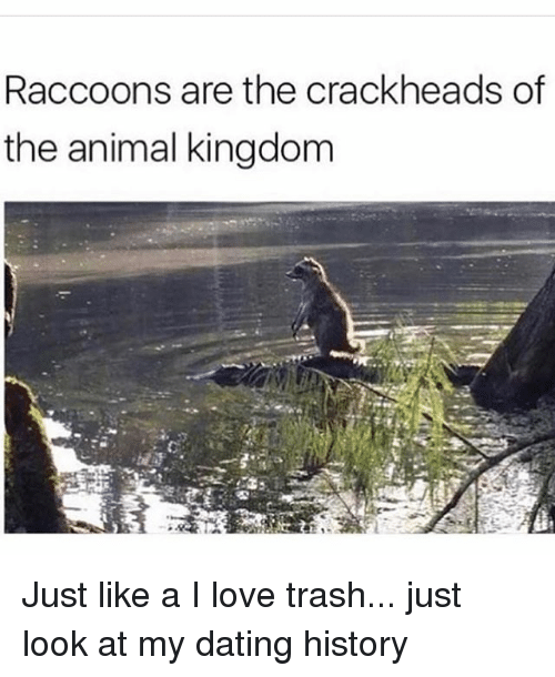 Dating, Love, and Trash: Raccoons are the crackheads of  the animal kingdom Just like a I love trash... just look at my dating history