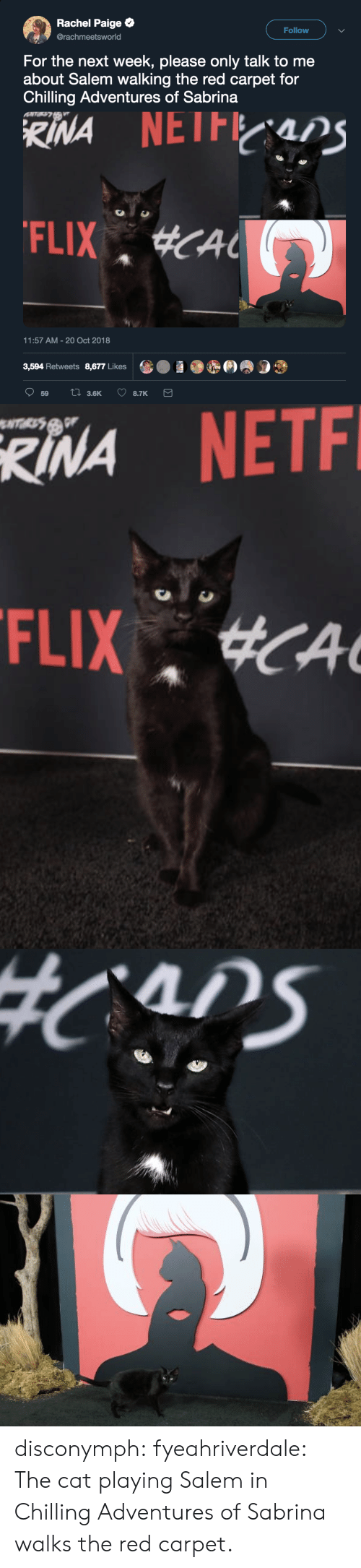 Red Carpet: Rachel Paige  @rachmeetsworld  Follow  For the next week, please only talk to me  about Salem walking the red carpet for  Chilling Adventures of Sabrina  11:57 AM-20 Oct 2018  3,594 Retweets 8,677 Likes   RINA  NETF disconymph:  fyeahriverdale: The cat playing Salem in Chilling Adventures of Sabrina walks the red carpet.