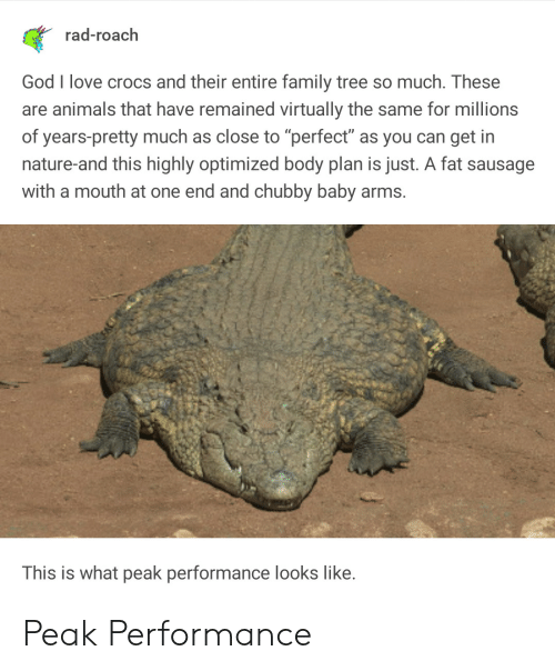 """virtually: rad-roach  God I love crocs and their entire family tree so much. These  are animals that have remained virtually the same for millions  of years-pretty much as close to """"perfect"""" as you can get in  nature-and this highly optimized body plan is just. A fat sausage  with a mouth at one end and chubby baby arms.  This is what peak performance looks like. Peak Performance"""