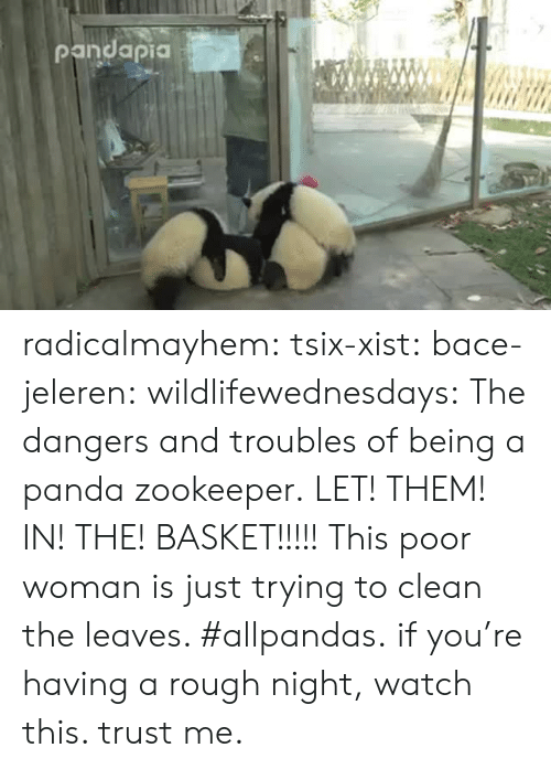 zookeeper: radicalmayhem: tsix-xist:  bace-jeleren:  wildlifewednesdays:  The dangers and troubles of being a panda zookeeper.  LET! THEM! IN! THE! BASKET!!!!!  This poor woman is just trying to clean the leaves. #allpandas.  if you're having a rough night, watch this. trust me.