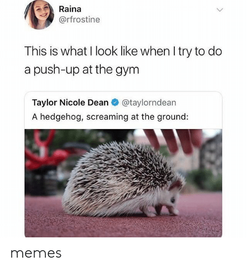 Gym, Memes, and Hedgehog: Raina  @rfrostine  This is what I look like when I try to do  a push-up at the gym  Taylor Nicole Dean  @taylorndean  A hedgehog, screaming at the ground: memes