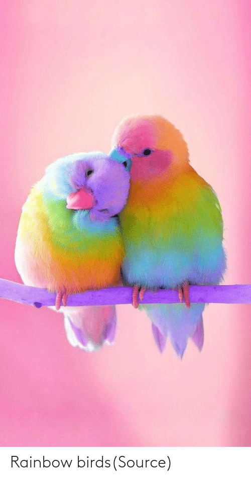 Birds: Rainbow birds(Source)